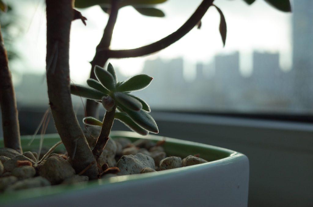 De verzorging van een kamerplant